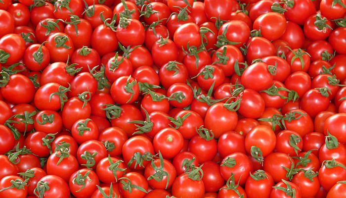 19 Tasty Tomato Recipes To Boost Your Health