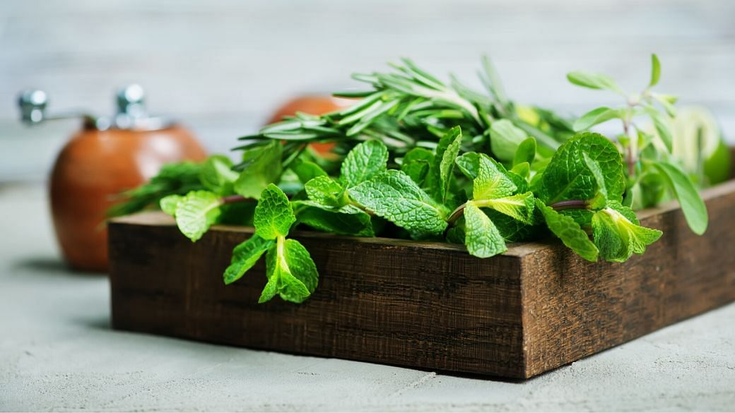 How To Grow Herbs & Veggies Successfully In Your HDB Flat 1