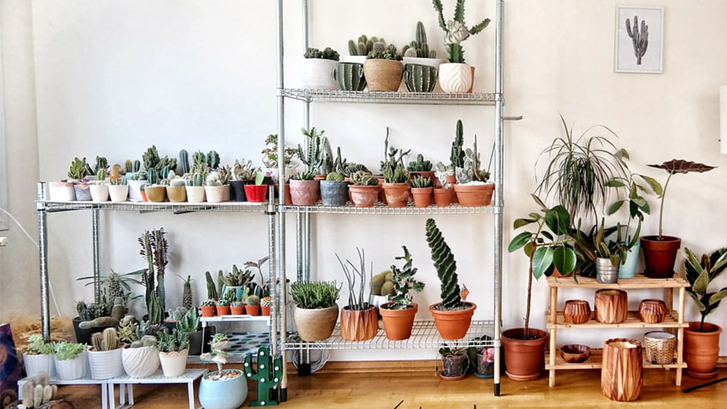 Looking For Gorgeous House Plants? Here's Where To Go In Singapore_Featured