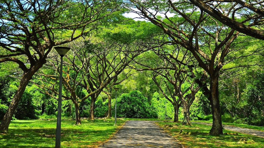 scenic parks singapore fresh air