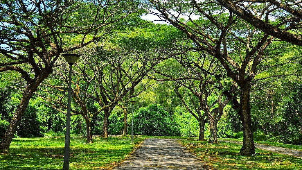 scenic parks singapore fresh air