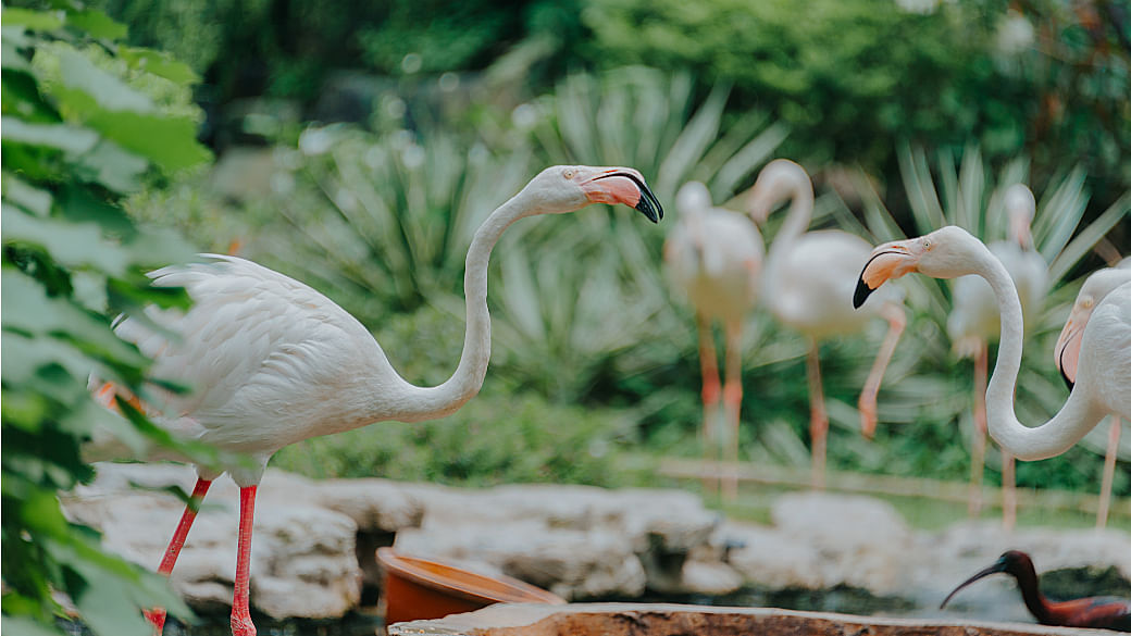 Singapore Zoo, ArtScience Museum and Universal Studios Reopening From 1 July: Advance Bookings Required