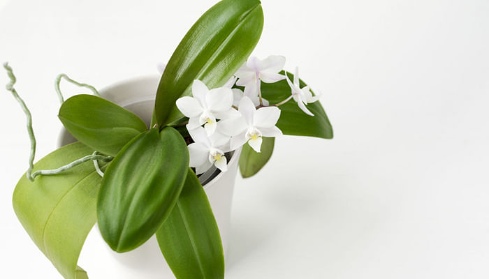 guide-to-growing-orchids-in-singapore-potting-mix