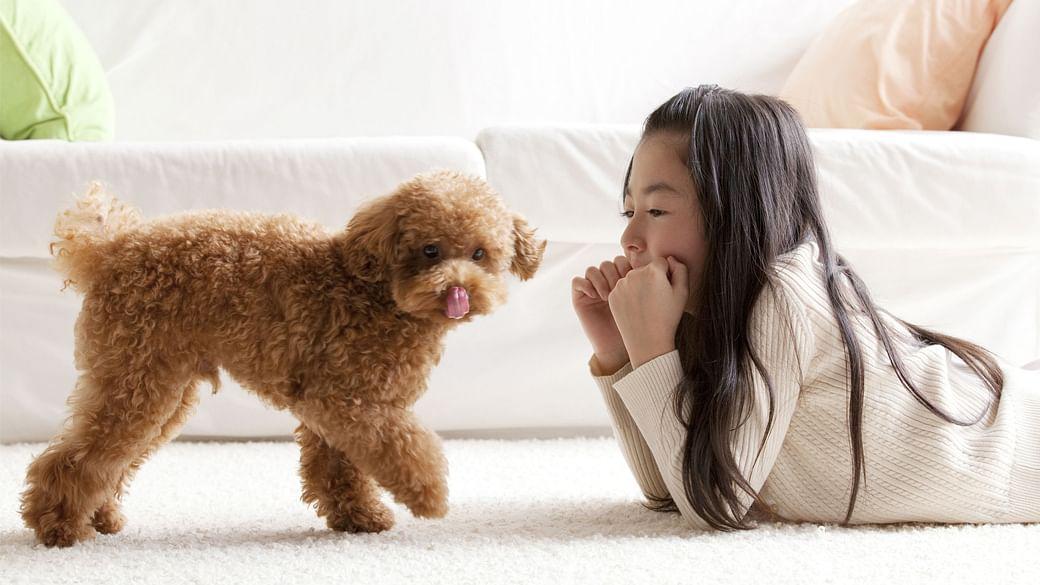 13-dog-breeds-pet-allergy-sufferers