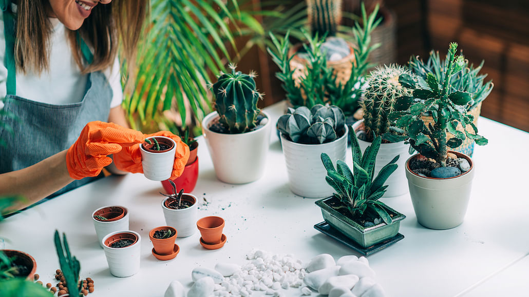 Spruce-Up-Indoor-Garden-With-Fun-Quirky-Pots