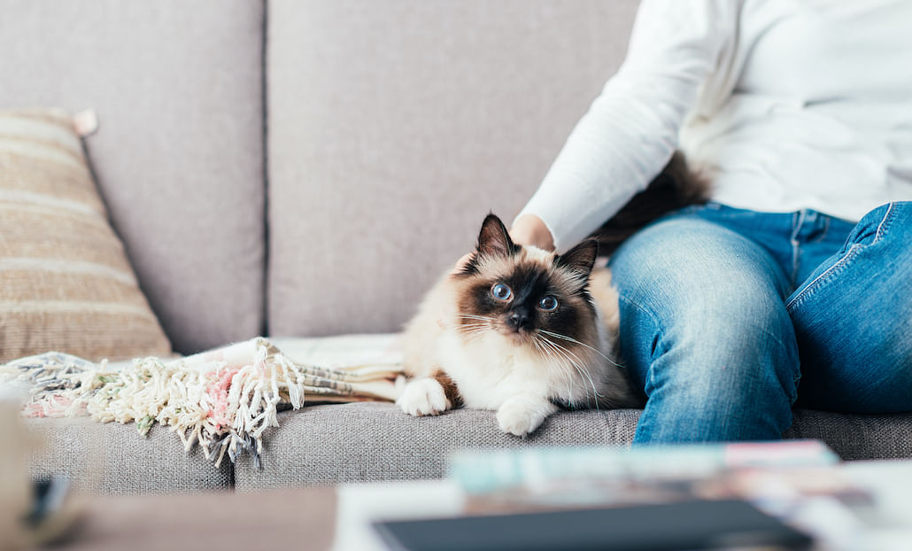 5-ways-to-prevent-pet-hair-from-taking-over-your-home