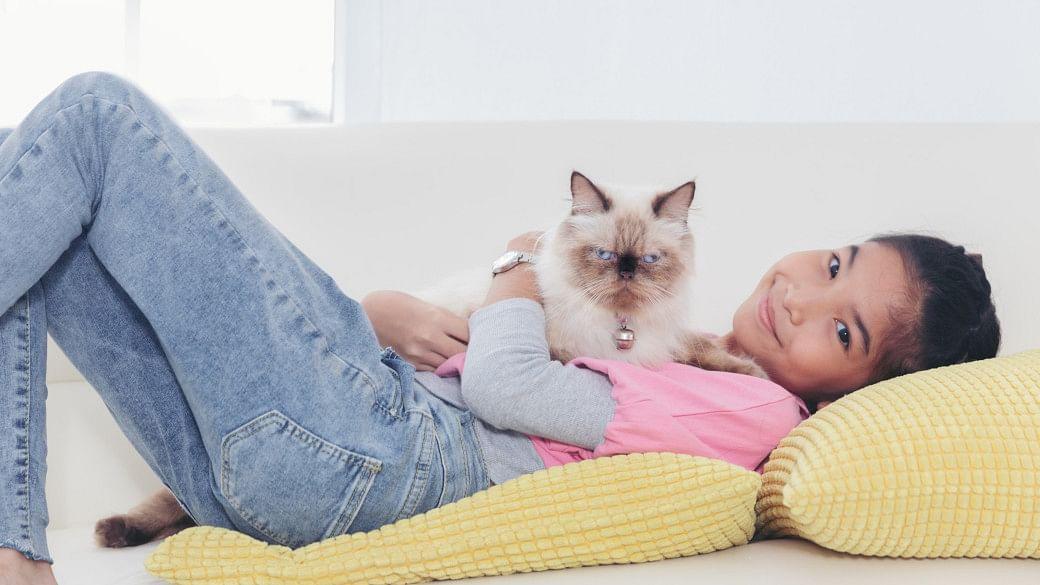 pet-adoption-singapore-helpful-tips-animal-welfare-groups
