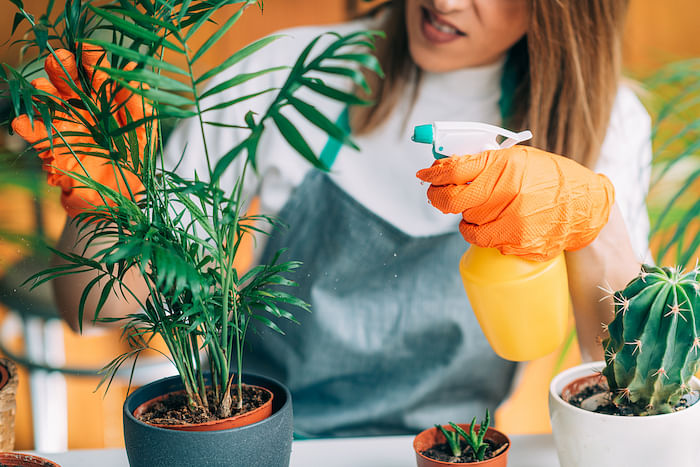 two-simple-tips-will-help-keep-potted-plants-thriving-1