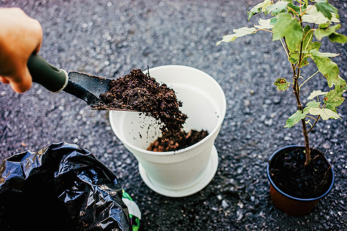 two-simple-tips-will-help-keep-potted-plants-thriving-2