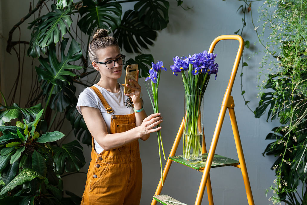 low-maintenance-indoor-plants-hydroponics-gardening-tips