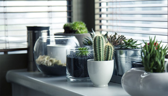 mini potted plants on a windowsill