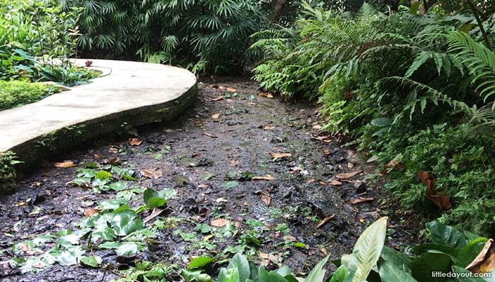 5 Spots in Botanic Gardens You Probably Didn't Know About_Marsh Garden
