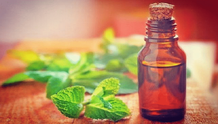 The One Thing You Should Be Using To Repel Mosquitoes_Peppermint
