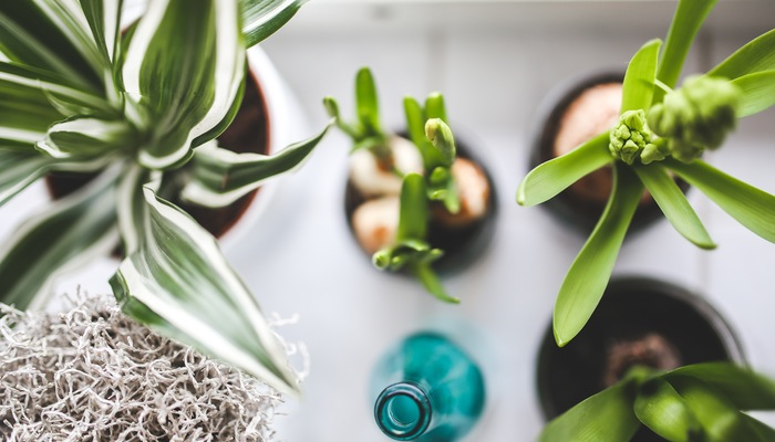 purify air at home house plants (2)