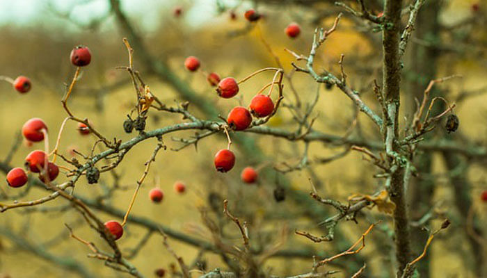 5-natural-oils-to-use-for-smoother-skin-and-hair_rosehip-oil