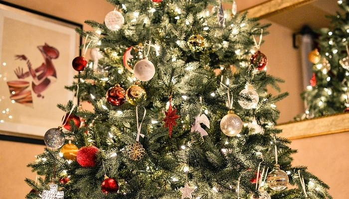 heres-where-to-get-a-real-christmas-tree-for-your-home-plus-buying-tips-2