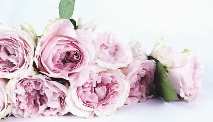 10 Mother's Day Flowers And The Special Meaning They Hold