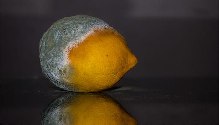 Mouldy-Lemon