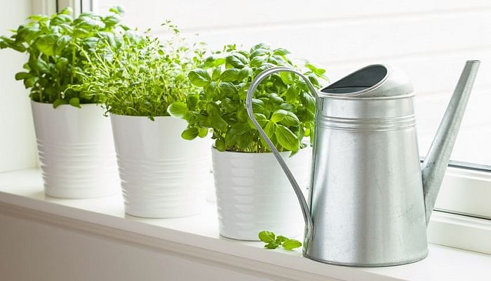 The Easiest Herbs To Grow At Home And More Tips From Local Experts