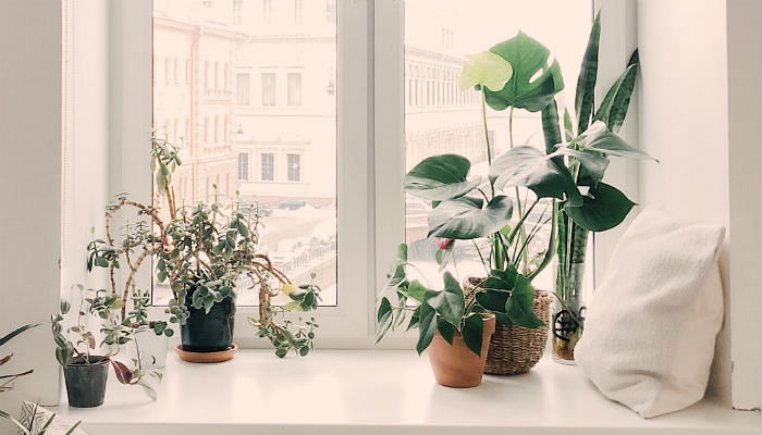 10 Indoor Plants Every Aspiring Jungalow Should Have - Featured