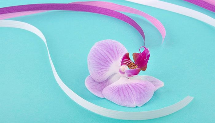 Orchid-flower-with-ribbons