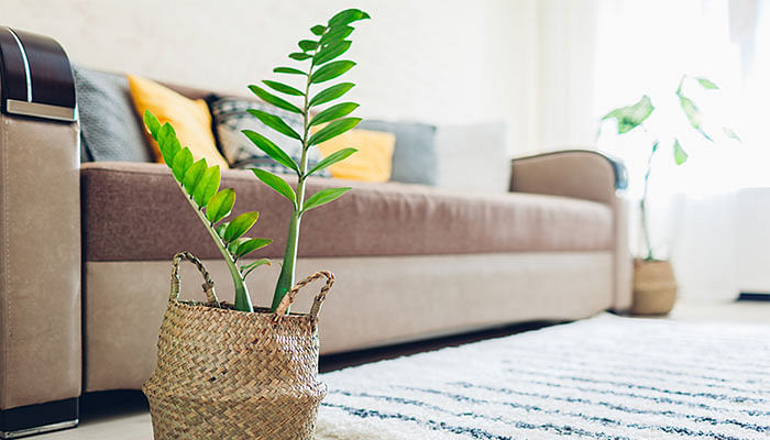 plants-in-living-room-home